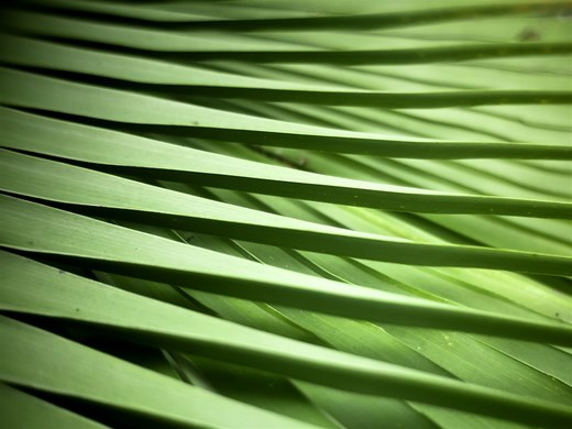 Palm Weave